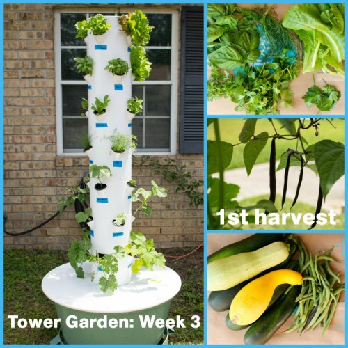 Tower Garden Collage